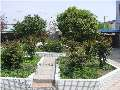 给校园植物挂牌1